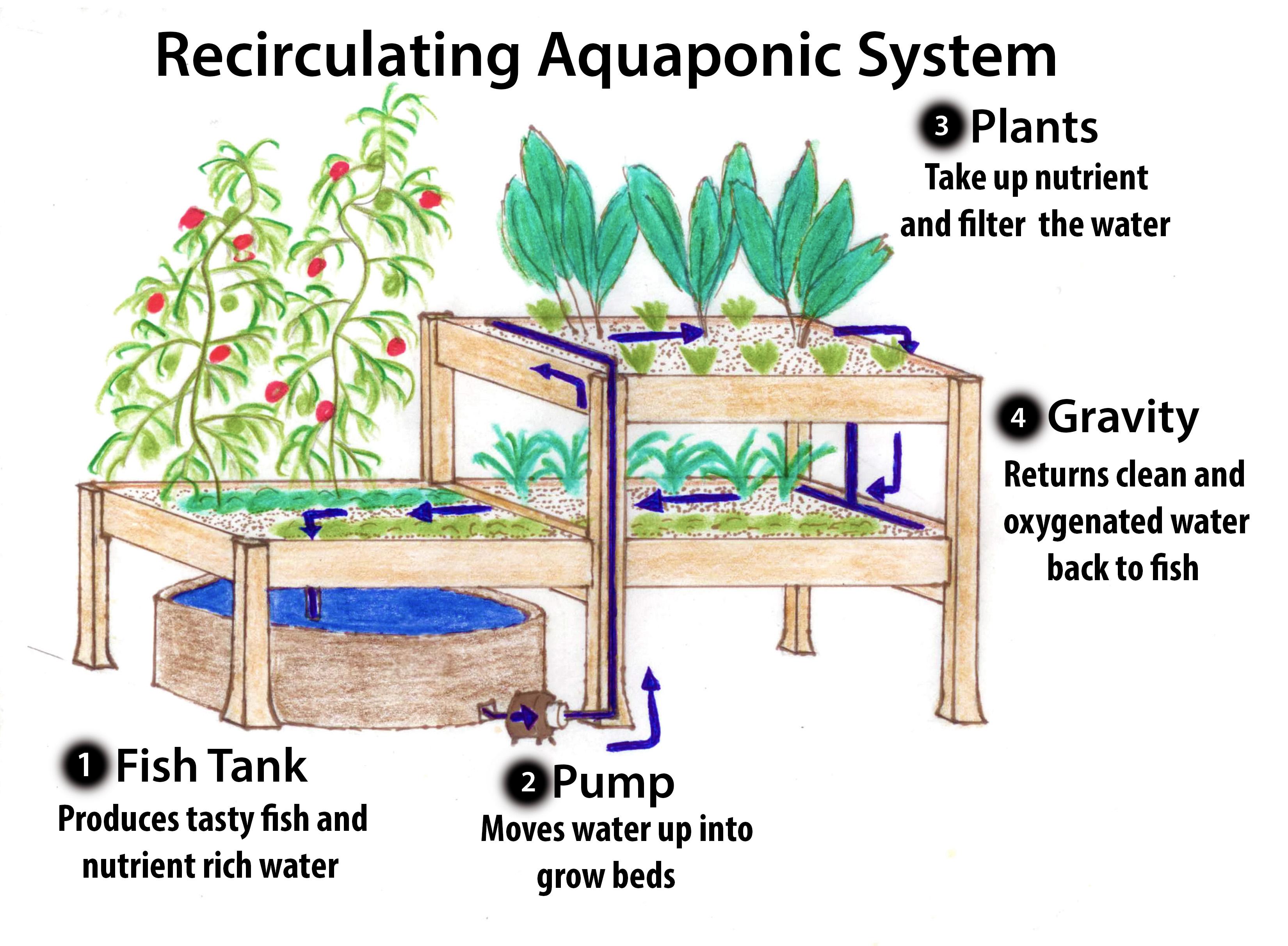 Victoria Aquaponics